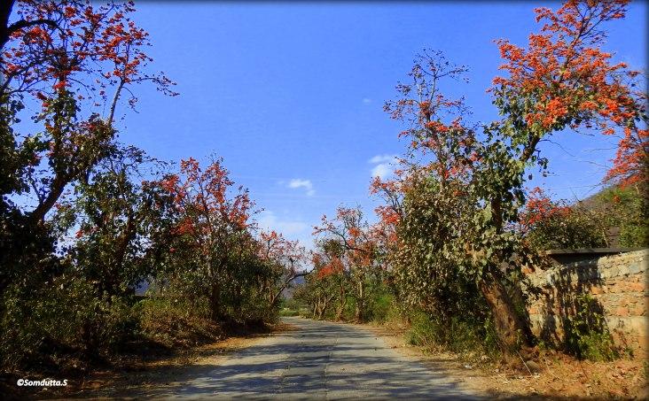 On the way to Bhangarh Fort near Sariska National Park